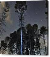 Deep Forest At Night Canvas Print