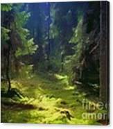 Deep Forest Canvas Print