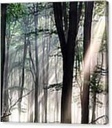 Deep Forest Morning Light Canvas Print