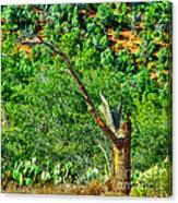 Deep In The Desert Of Arizona Green Grows Canvas Print