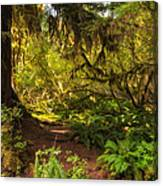 Deep Into The Hoh Rain Forest Canvas Print