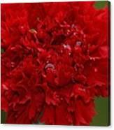 Deep Red Carnation 2 Canvas Print