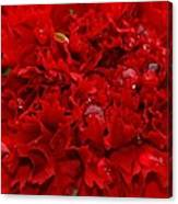 Deep Red Carnation Canvas Print