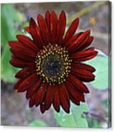 Deep Red Sunflower Canvas Print