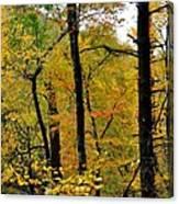 Deep Woods Canvas Print