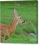 Deer 13 Canvas Print
