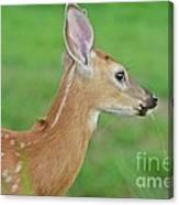 Deer 14 Canvas Print