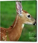 Deer 16 Canvas Print