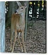 Deer 3 Canvas Print