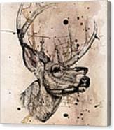 Deer 4 Canvas Print