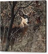 Deer Ahead Canvas Print
