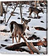 Deer And Snow Canvas Print
