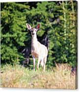 Deer Approaching Canvas Print
