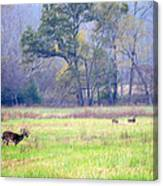 Deer At Cades Cove Canvas Print