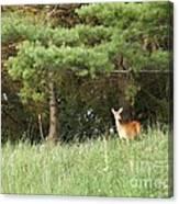 Deer At Dusk V1 Canvas Print