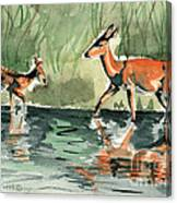 Deer At The River Canvas Print