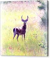 Deer - Buck - White-tailed Canvas Print