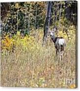 Deer Camoflauged Canvas Print