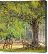 Deer Crossing Canvas Print