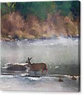 Deer Crossing Stream Panoramic Canvas Print