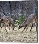 Deer Discussion E167 Canvas Print