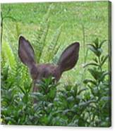 Deer Ear In A Mint Patch Canvas Print