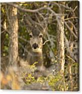 Deer Frame Canvas Print