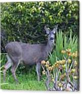 Deer II Canvas Print