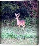 Deer-img-0122-7 Canvas Print