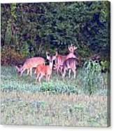 Deer-img-0156-002 Canvas Print