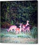 Deer-img-0158-003 Canvas Print