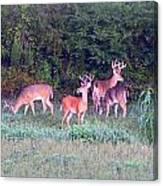 Deer-img-0160-005 Canvas Print