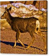 Deer In A Different Light Canvas Print