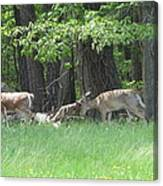 Deer In A Group Canvas Print