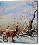 Deer In Crete Canvas Print