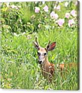 Deer In Magee Marsh Canvas Print