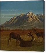 Deer In Mountain Home Canvas Print