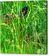 Deer In Tall Grass Canvas Print