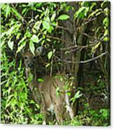 Deer In The Bushes Canvas Print