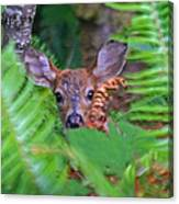 Fawn In The Ferns Canvas Print