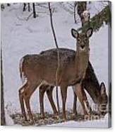 Deer In The Trees Canvas Print
