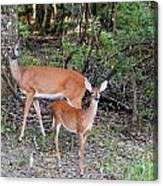 Deer Mom 2 Canvas Print