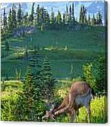 Deer Mountain Canvas Print