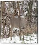 Deer Of Beauty  Canvas Print