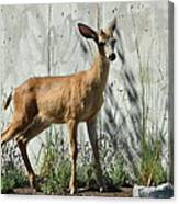 Deer On A Walkabout Canvas Print