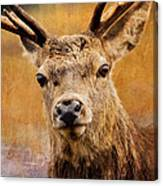 Deer On Canvas Canvas Print