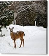 Deer On Side Of Road Canvas Print