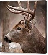 Deer Pictures 491 Canvas Print