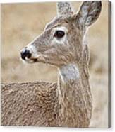 White Tail Deer Profile Canvas Print