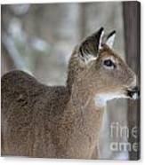 Deer Profile Canvas Print